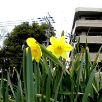 久々じっくり散策ー人知れず咲く花など!昨日その2