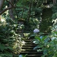 苔が美しい鎌倉のお寺♪「妙法寺」、(2017初夏)。