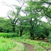 あまり梅雨らしくない神代植物公園 其の4