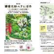 鎌倉花火大会と鎌倉佐助のさんぽ市は間もなく、夏の日はカーニバル…。