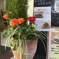 アロマタイムカフェ、寄せ植え春バージョン