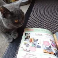 『子猫マニアックス』掲載についてのご報告