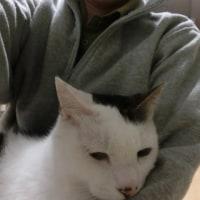にゃん2016/12/4(日)猫を膝にのせてテレビを見る。