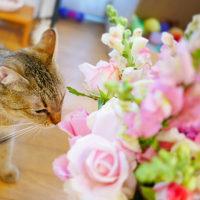 お誕生日のお花 あんミィちゃん