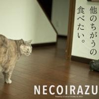NECOIRAZU—ネコと暮らす