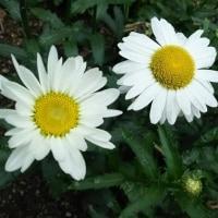 お花いっぱい~咲いてます
