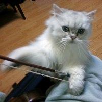 ミルクとバイオリンの弓