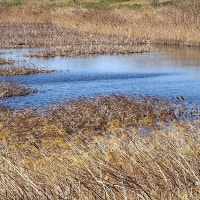 芝川第一調節池