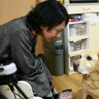 介助犬、普及進まず 九州に2匹、店や職場に「壁」