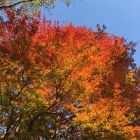 川崎市立日本民家園の紅葉