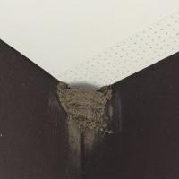 つばめが巣をつくりました
