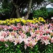 梅雨の晴れ間に(2)~池田城跡&玉水ゆり園・6月後半