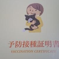 【小梅・さくら通信】さくらの予防接種に行ってきました♪