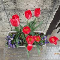 春は名のみの風の寒さや~~~🎶 が、春は進んでいます・・・・・