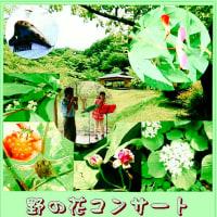 野の花コンサート in 卯辰山、爽やかな風と光の中、お弁当を持ってGo!