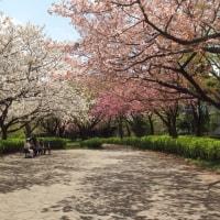 桜を求めて4