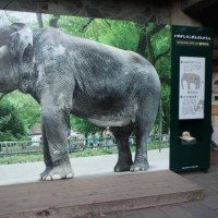 井の頭自然文化園 はな子展