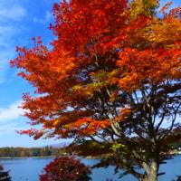 紅葉の季節お終い