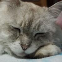 疲れたから・・・寝かしてください