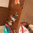 子猫部屋でのびのびで〜す😽