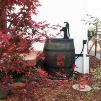 楓と雨水タンク。手押しポンプセット