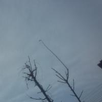 仙台の空1月20 日、金曜日