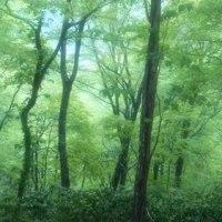 京都北山を北方へ(シリーズ2)・・・その④