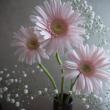 今日の仏花【ピンクのガーベラ】