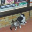 野良猫二匹なり