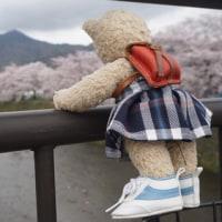 2017 ミモロの京都桜めぐり。京都の町を歩きまわった春の日々