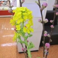 店内紹介 菜の花