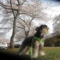 富士霊園を廻ってからドックランでボール遊び