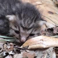 ★ 子猫ちゃんは、超可愛い ฅ(○•ω•○)ฅニャ~ン ❤