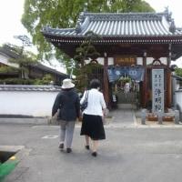 松山市・浄明院の牡丹♪(4月25日)
