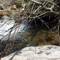 北陸の渓は水量多め!