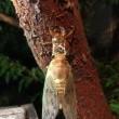 ニンジンの発芽とセミの羽化