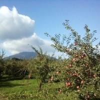 りんごの生育状況ー初冠雪他ー