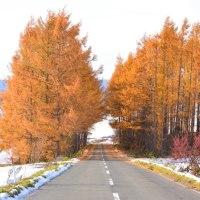 秋色トンネル