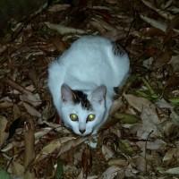 庭猫 373