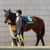 お仲間さん写真館 ~スナッチマインド・京都牝馬S~