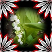 庭中が花&花