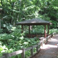 清田緑地は緑のシャワーいっぱい