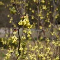 華やかな春にひっそり咲く花たち・・・2017年春の公園散歩(2)