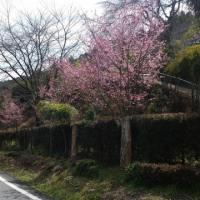 春の彼岸。