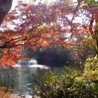 東京都立井の頭恩賜公園2016年の紅葉・・