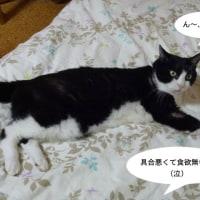 食欲無いの!?