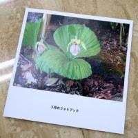 写真活用方法 その2~ノハナ(nohana)