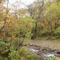 奥利根水源の森の紅葉は見頃まであと一歩だった。