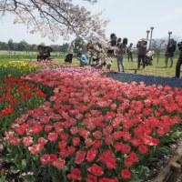 「昭和記念公園」のチューリップを眺めた後、「名探偵コナンから紅の恋歌」鑑賞