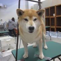 トリミング猫犬ご紹介
